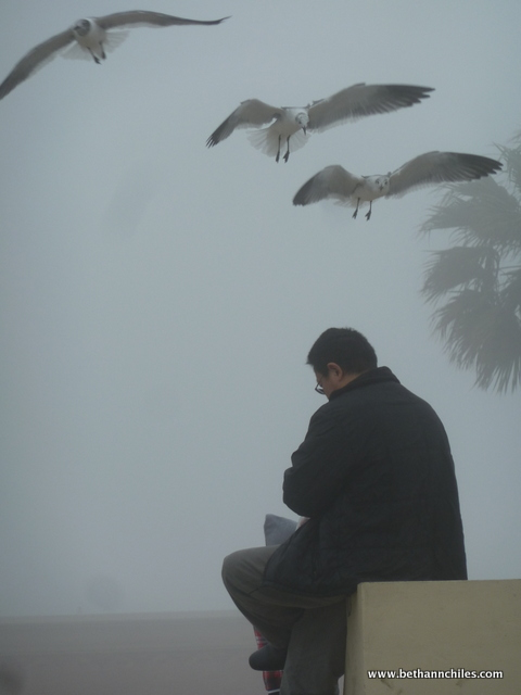 This man was feeding the seagulls and had quite a crowd around him.