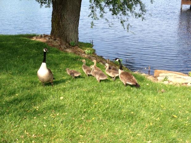 Early morning walk companions at Copeland Oaks