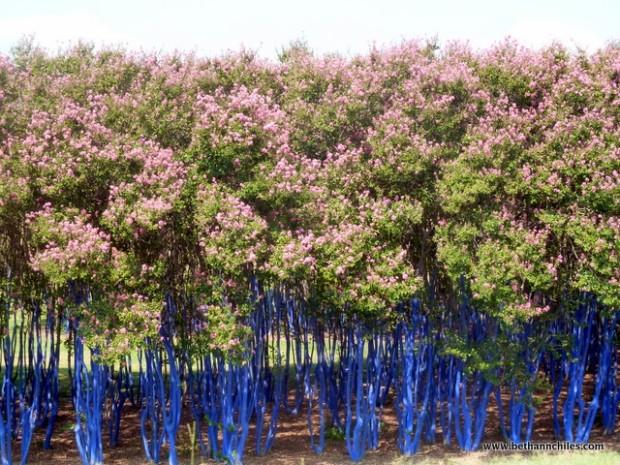 www.bluetreestexas.org