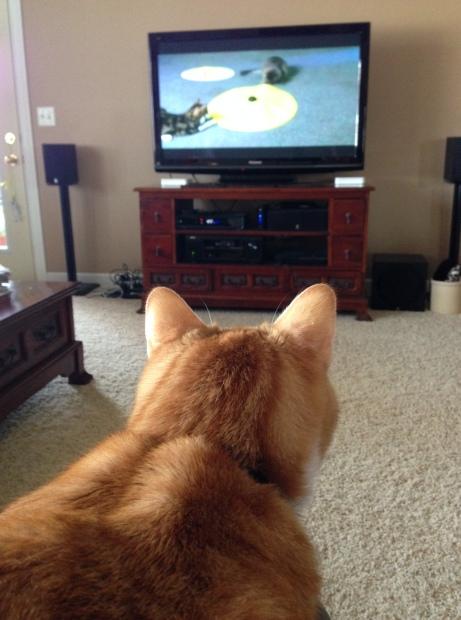 buddy watching
