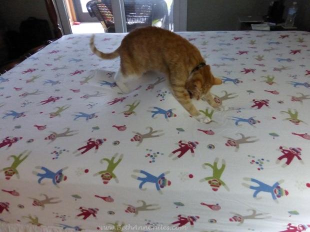 Cat on top of lump