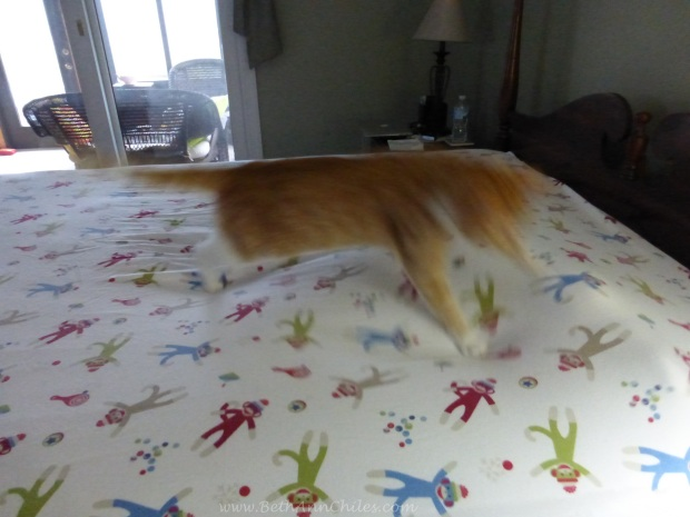 Cat attacking moving lump
