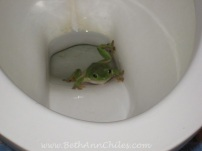 One of our toilet frogs