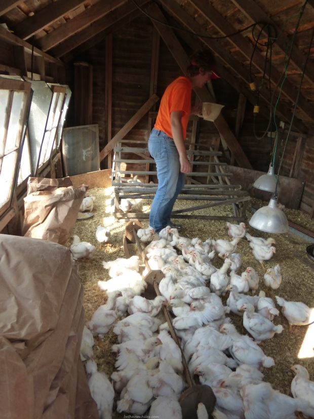 Shannon Latham loves her chickens from Hoover's Hatchery (Oh  yes--I still need to do a post on THAT trip!)